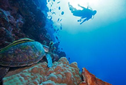Galapagos-Information-tab5-imagen1