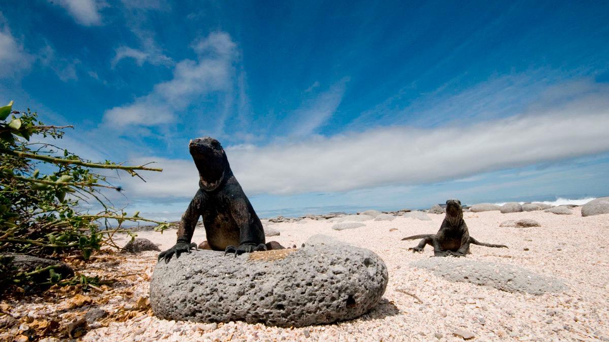 Galapagos A Natural History