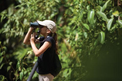 Observstions Wildlife