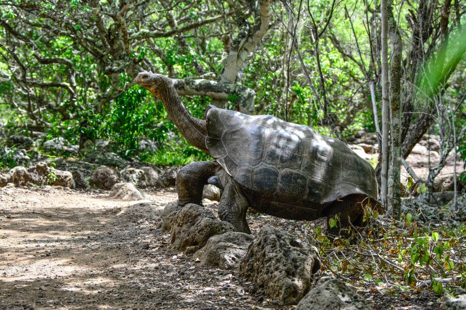Giant Tortoise Reserve on Santa Cruz Island, Galapagos.