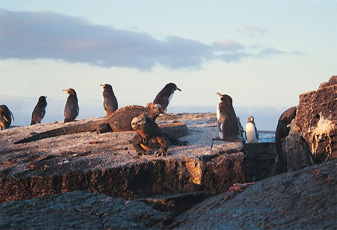 Discovering the wildlife of the Galapagos