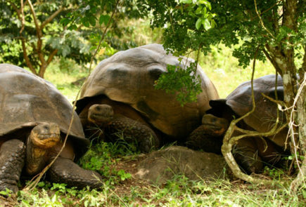 Reptiles in Galapagos