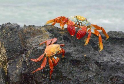 galapagos-photograph-tips