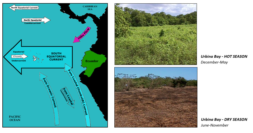 How Galapagos vegetation changes from season to season