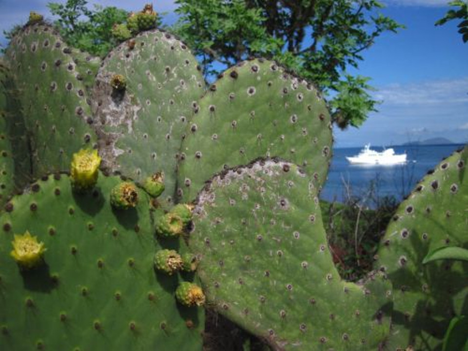 Galapagos plant life, cactus.