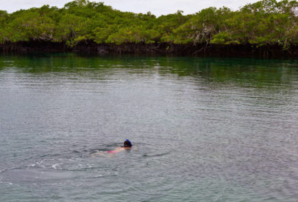 Swimming by the mangroves at Concha de Perla in southern Isabela Island Photo credit: El Diario