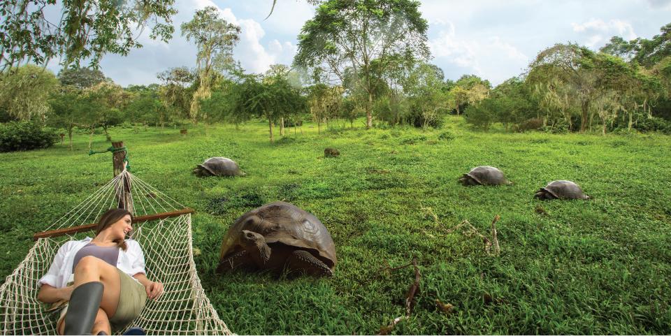 Meet the Galapagos giant tortoises.