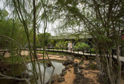 The gardens of the Finch Bay Galapagos hotel are made up of buttonwood mangroves. World Wetlands Day