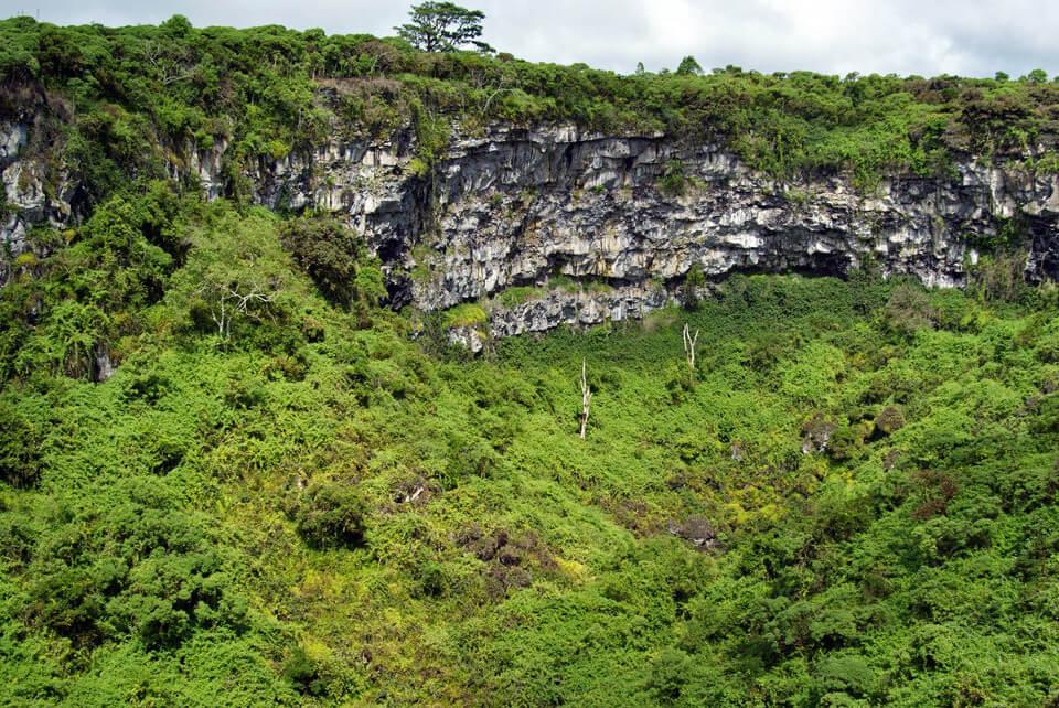 Scalesia forest around Los Gemelos, in santa Cruz Island.