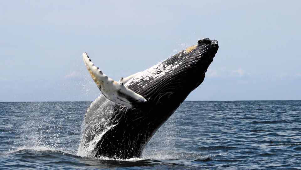 Whale in Galapagos.