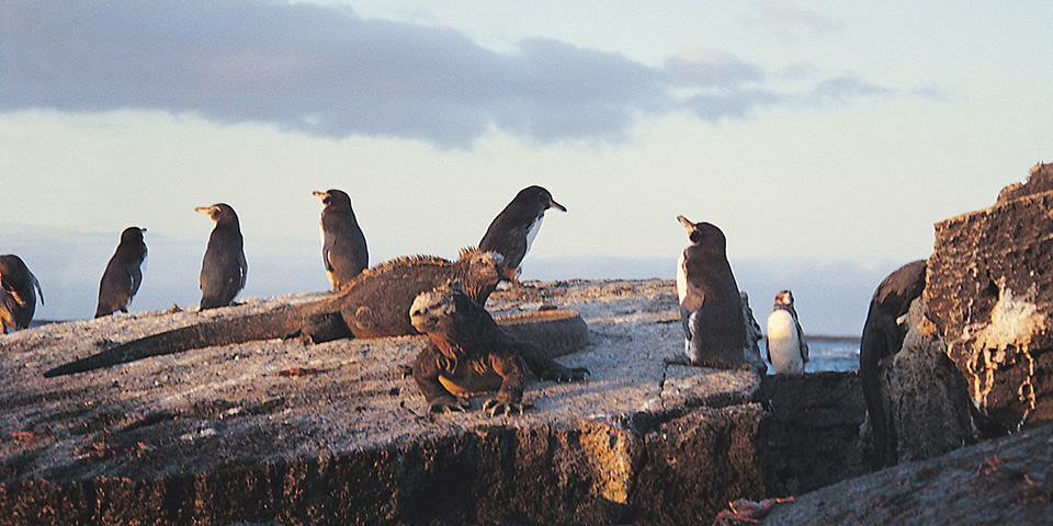 Galapagos & Colombia Tours