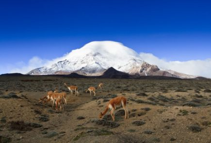 Chimborazo-landscape