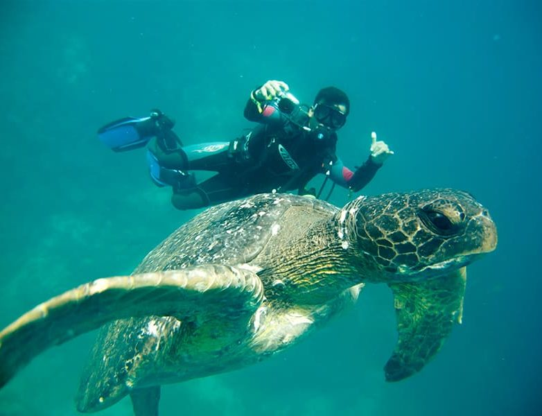 Diving with Sea Turtles in Galapagos