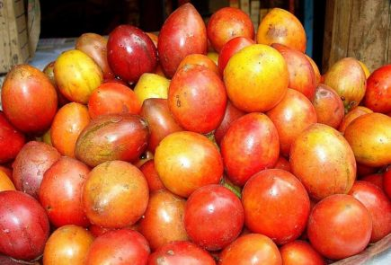The land of tropical fruits. Tamarillo. Photo By Aruna at Malayalam Wikipedia, CC BY-SA 3.0, https://commons.wikimedia.org/w/index.php?curid=12095848