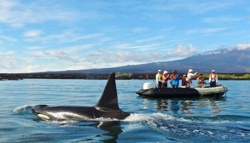 Solo Travel Galapagos