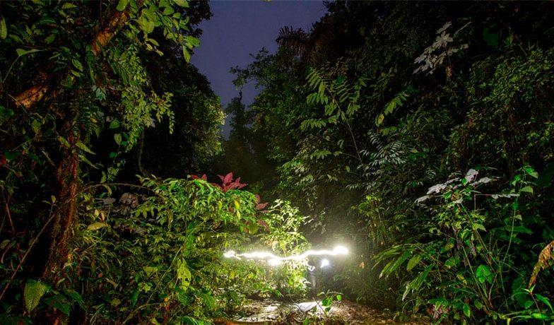 Mashpi Lodge night walk