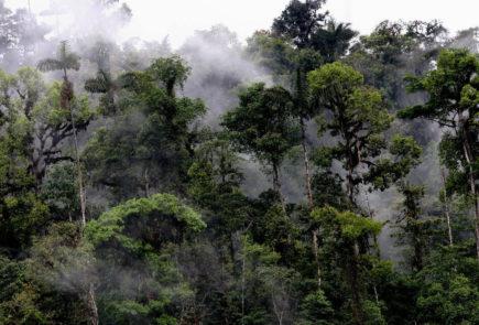 Rainforest in mashpi.