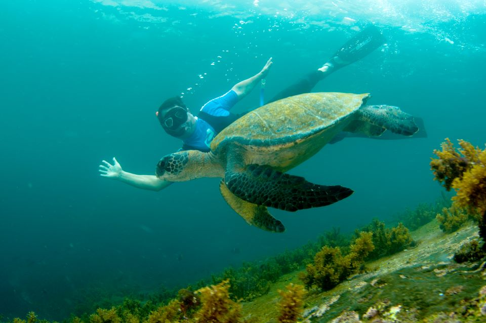 A guest encounter with a sea turtle while snorkeling in the Galapaos Islands.
