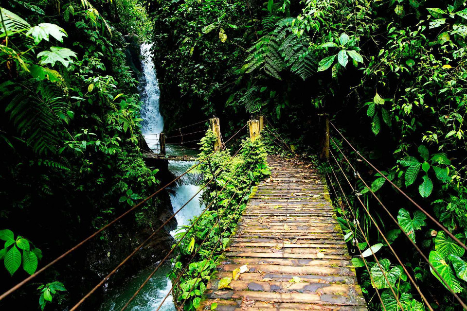 Mindo cloudforest. Photo credit: onedayaway.com