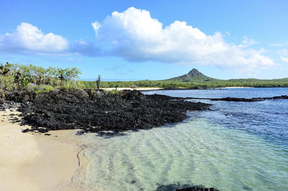 Cerro dragon in Santa Cruz island.