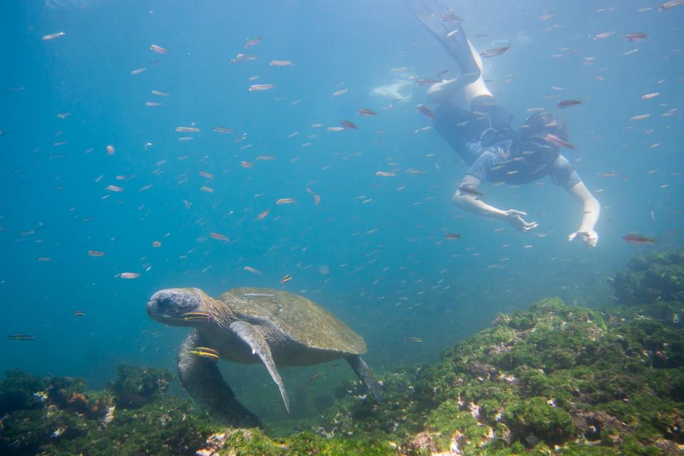 Snorkeling with wildlife.