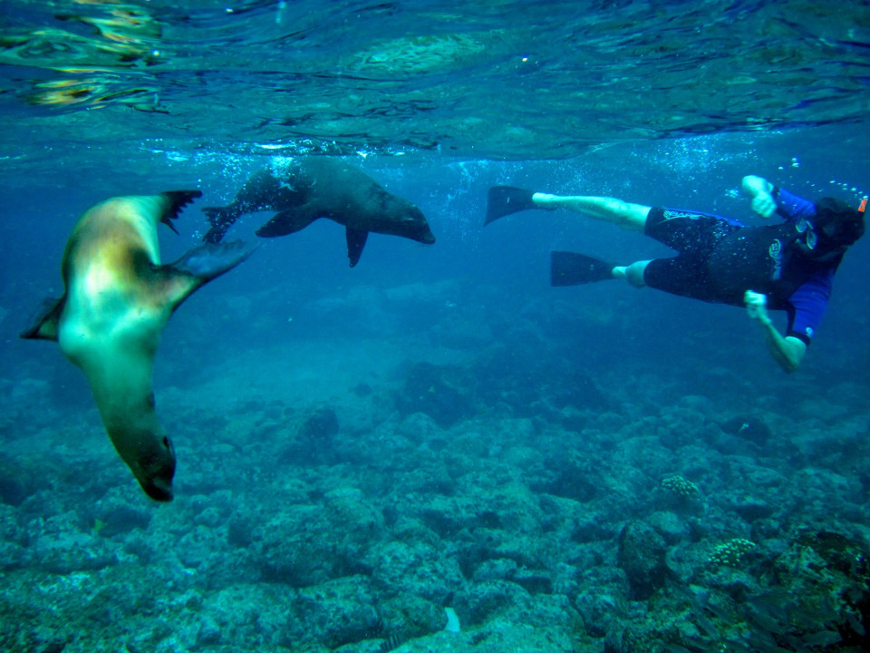 snorkelling in galapagos