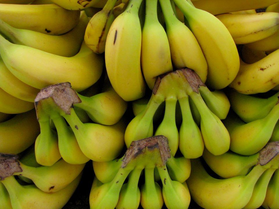 Ecuadorian bananas.