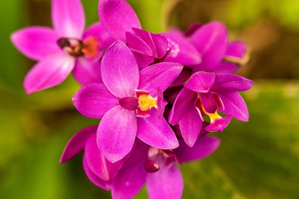 Orchid found at Mashpi Lodge