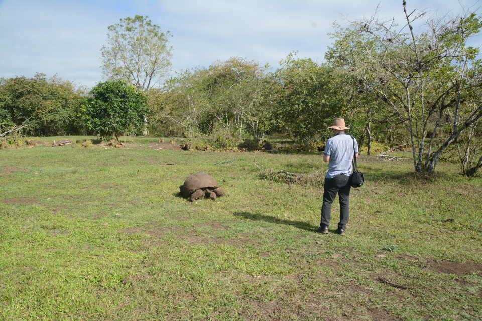 Guest spots a giant tortoise in Santa Cruz Island.