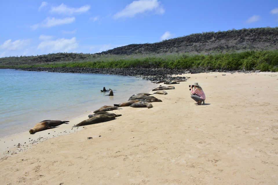 A group of Galapagos sea lions resting in the beach of Santa Fe Island.