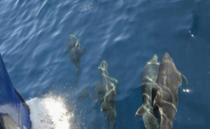 dolphins in galapagos