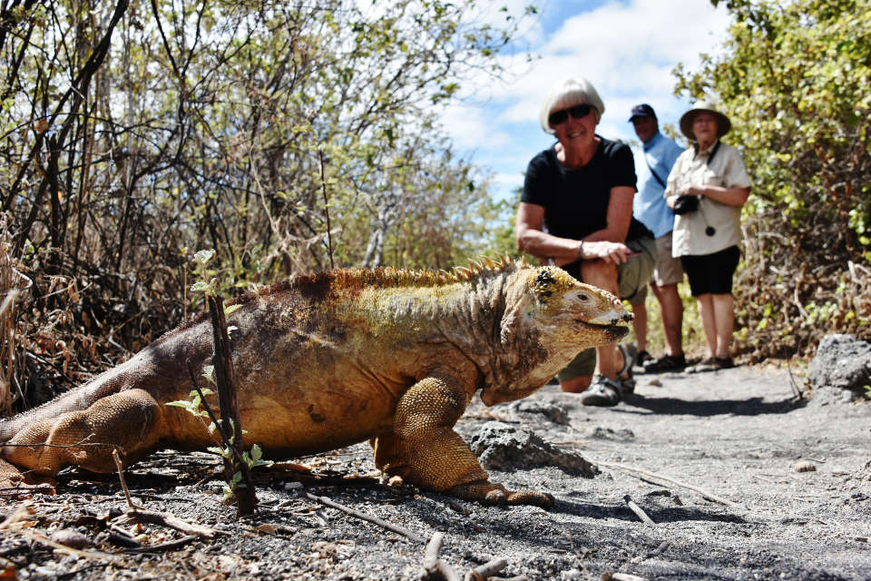Guests encounter with the land Iguana.