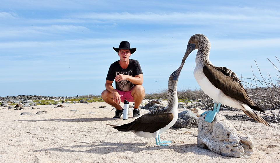 Guest between a blue-footed booby.