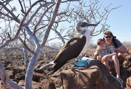 Guests enconter with a blue-footed booby during a land expedition.