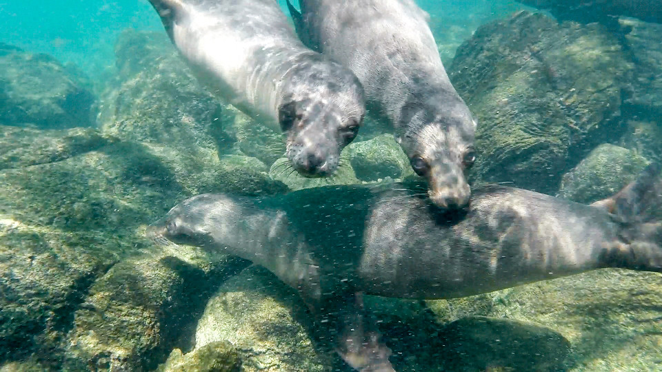 sea lions in galapagos