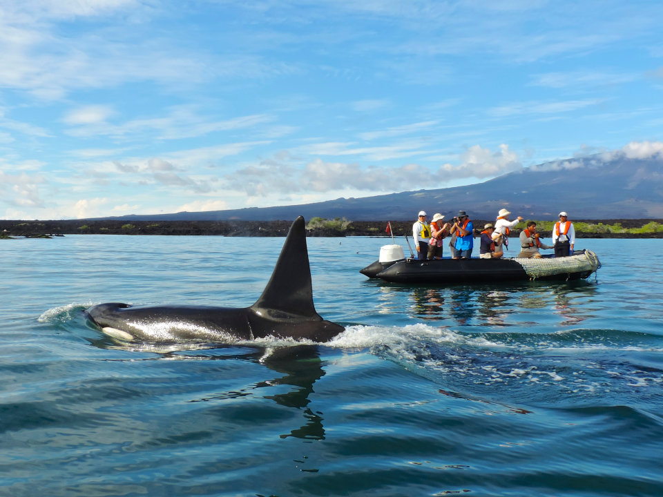 Galapagos whale watching