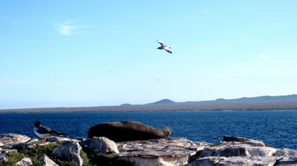 Galapagos South Plaza Island landscape with iconic species.
