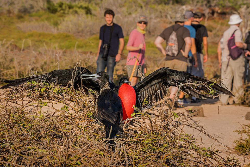 Galapagos Seyemour Island iconic species.