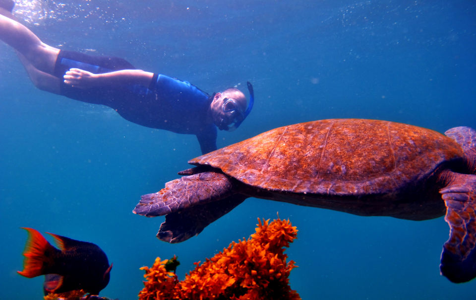 Guest snorkeling with a sea turtle.