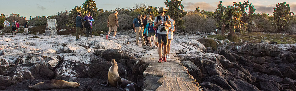 Multiguided cruises and excursions in the Galapagos.