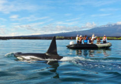 Guests encounter with a whale during a panga ride. in the Galapagos Islands.