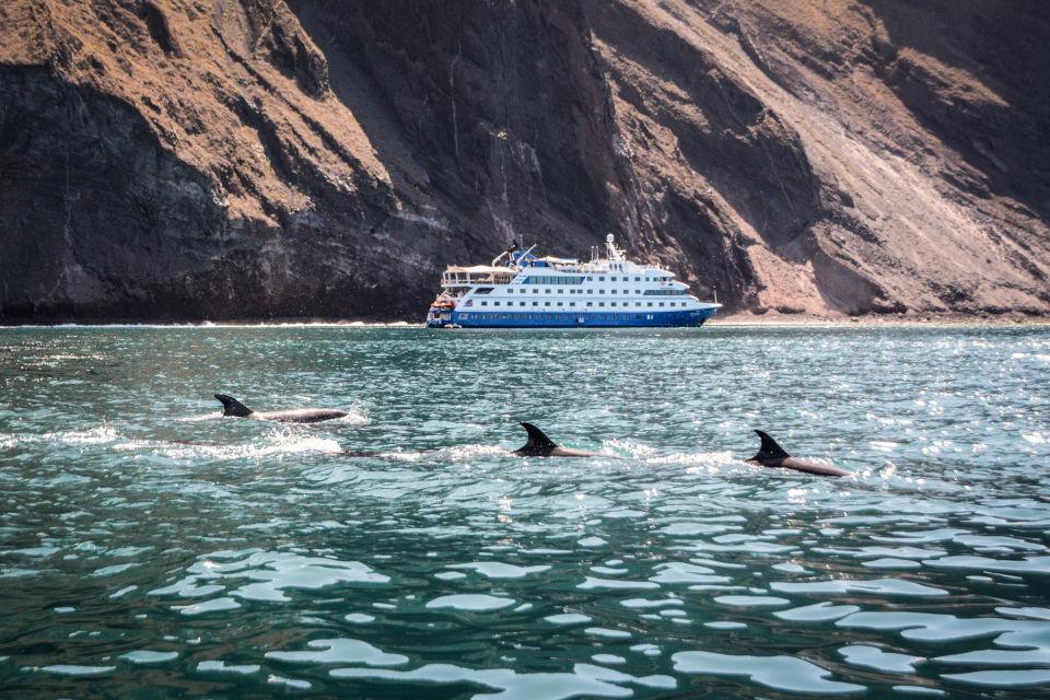 The Santa Cruz II cruise encounter with whales.