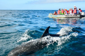 Guests encounter with a whale during a panga ride in the Galapagos Islands.