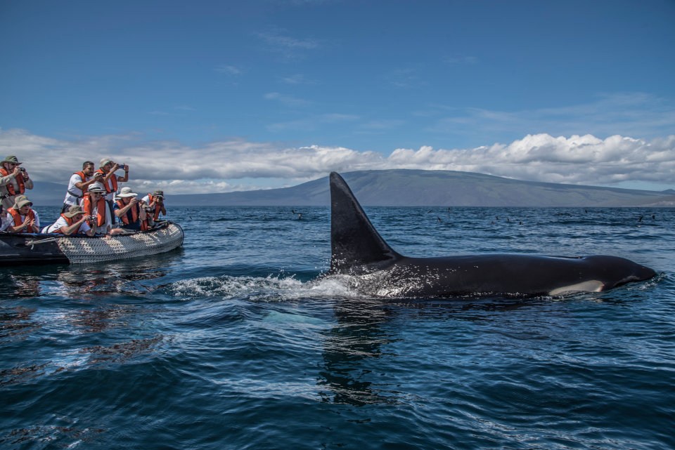 Whale watching experience at the Galapagos Islands.