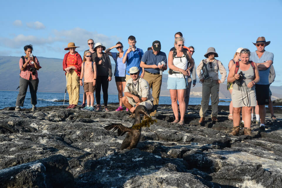 Guests encounter with a Flightless Cormorant.