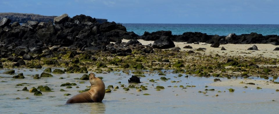 Sea lion at Genovesa Island.