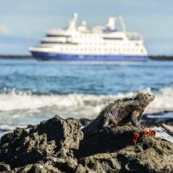 marine iguana galapagos cruise