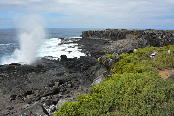 Española Island: Best Galapagos Cruise Itinerary