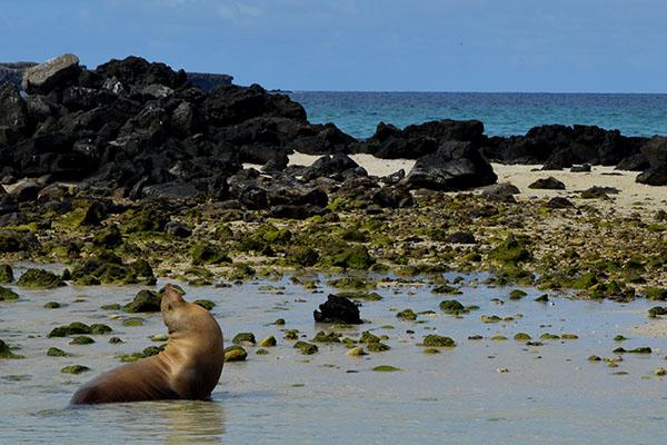 Genovesa Island: Best Galapagos Cruise Itinerary