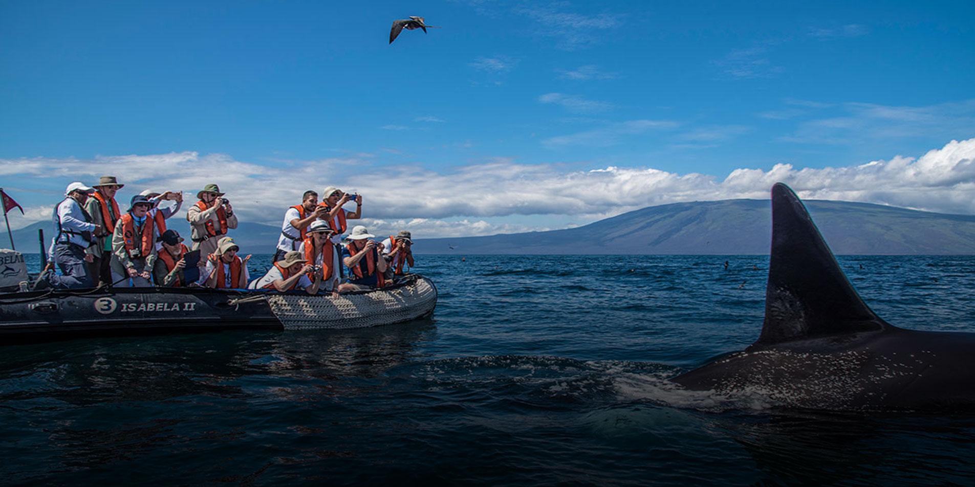 Ecuador and Galapagos - 2019´s Adventure of a Lifetime